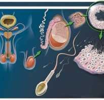 Как восстановить сперму — Лечение потнеции